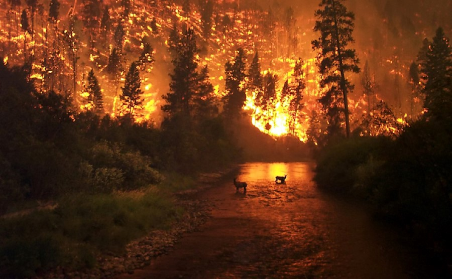 Scorching Real Estate: Comparing the California, B.C. and Fort McMurray Wildfires'Impact